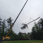 best tree pruning columbia