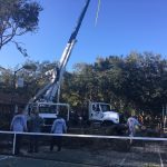 tree removal in columbia