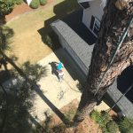 local tree pruning companies